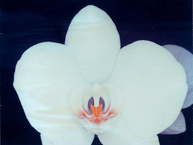 http://florianhuth.de/sites/files/gimgs/30_orchid.jpg